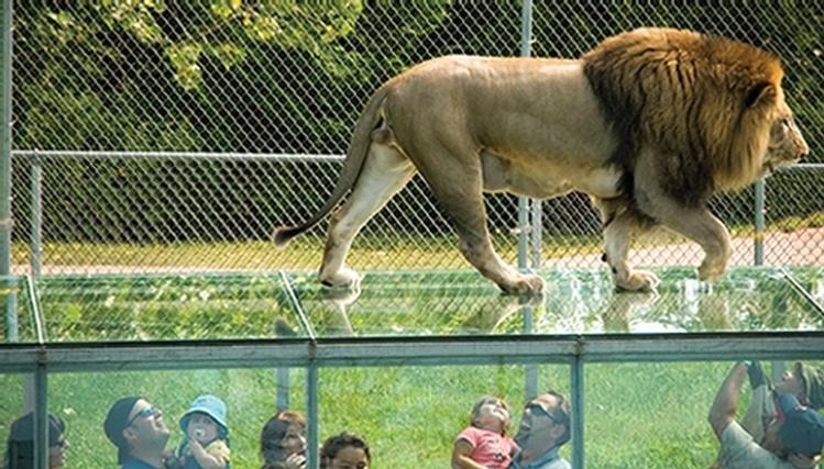 Parc safari montreal discount coupons