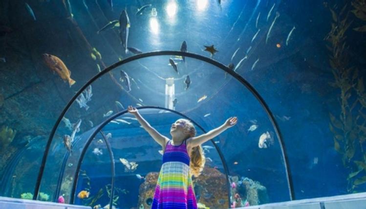Aquarium du qu bec s paq for Acoiriome de poisson